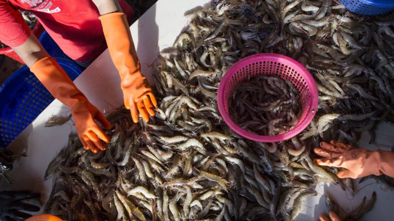Seafood Firms Ordered to Respond to Cambodian Workers' Complaint