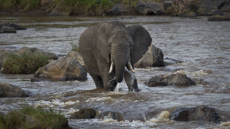 Spatial Planning: Critical for Africa's Wildlife