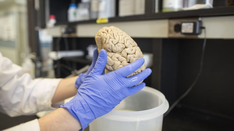 Pill for Menstrual Pain Restores Memory in Mice with Alzheimer's