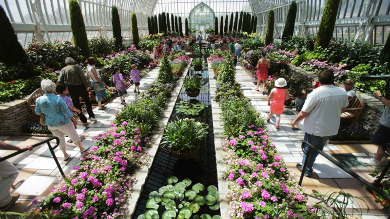 Plants Clear Indoors of Pollutants, Study Says